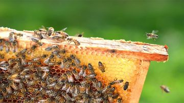 Grow Your Business with the Best Beekeeping supplies NZ