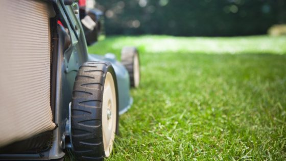Beginner's Guide to Lawn Care