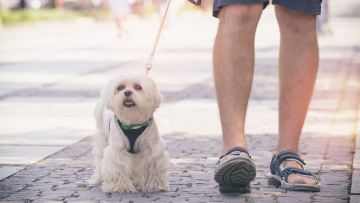 Why Busy Profesionals Need To Hire A Dog Trainer