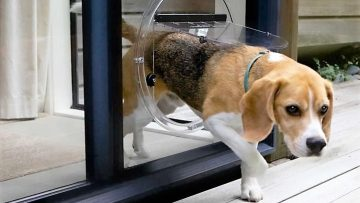 What You Need to Know for the Right Size Pet Door